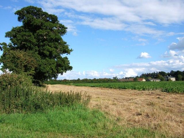 Ashwell Farm from Mill Lane
