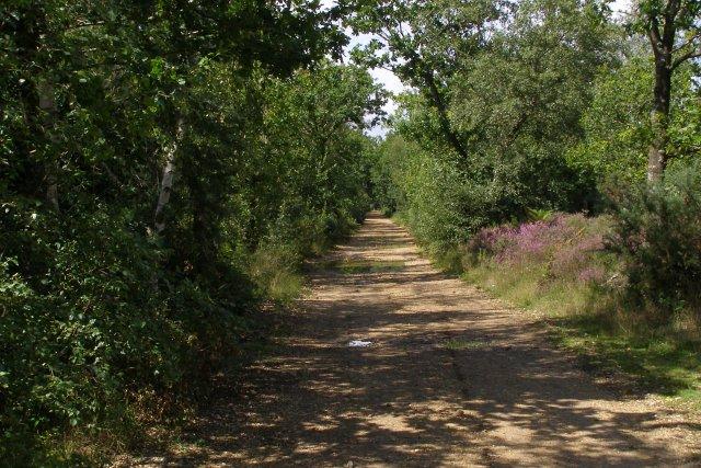 Dudmoor Lane, Town Common