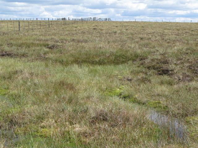 Boggy ground above Redburn Edge