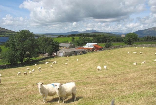 Llain Wen Farm
