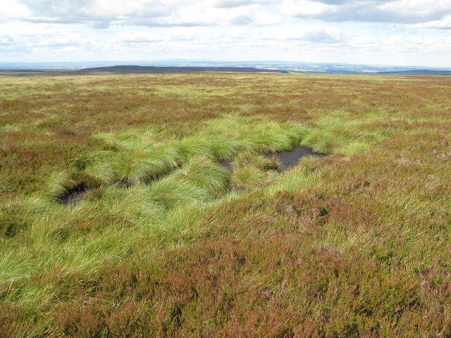 Heatheryburn Moor