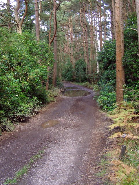 Track to Wattons Ford