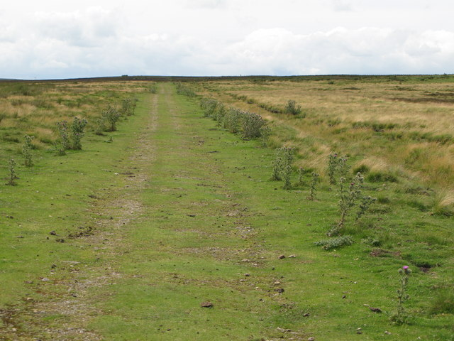 Track on Birkside Fell