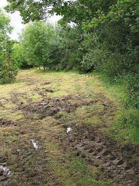 Waterlogged field, Picklescott