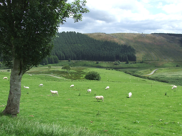Grazing near the Camddwr, Ceredigion