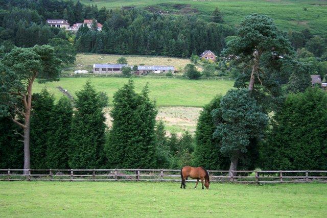 Paddock, Near Castleton
