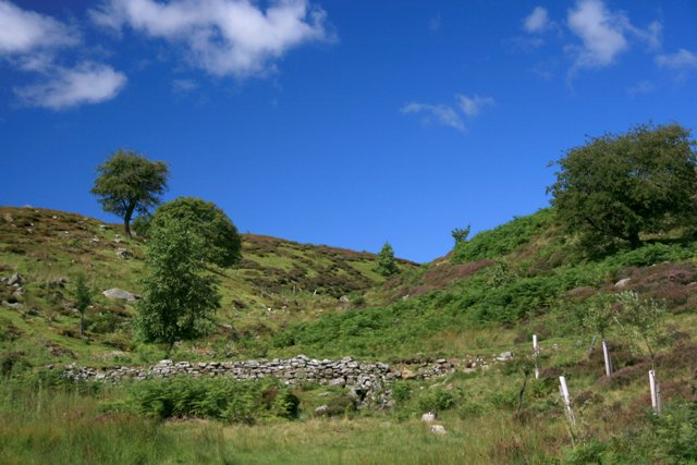 Swar Beck, a Tributary of Cogden Gill