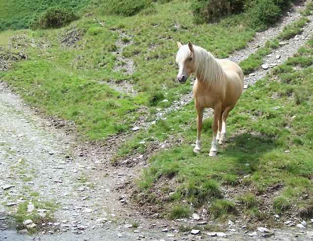 Pony by the Ford, Nant Llwydd, Ceredigion