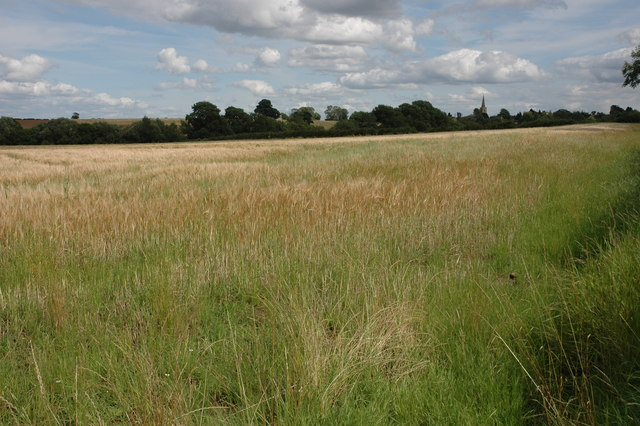 Field of barley near Todenham