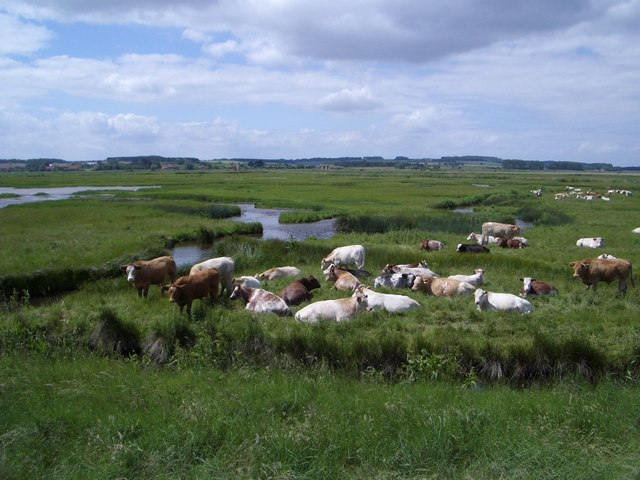 Pastoral Scene on Norton Marsh
