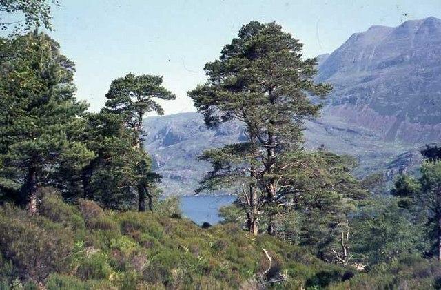 Loch Maree and Slioch