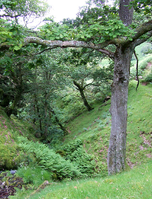 The Gorge, Nant Lluest Fach, Cwm Doethie, Ceredigion