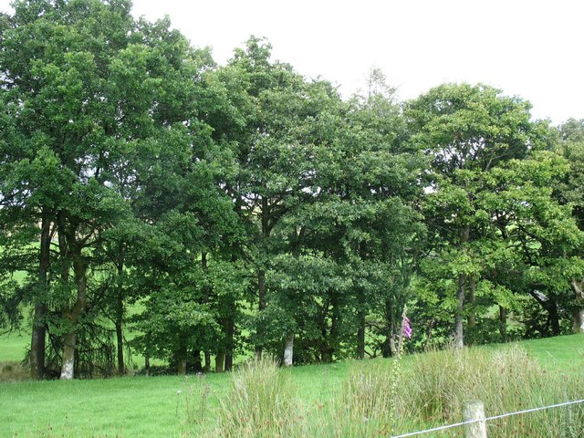 Trees on the banks of Nant Islyn