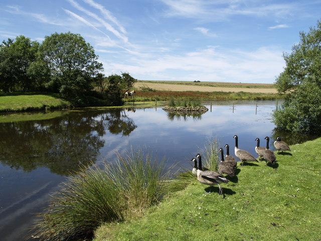 Buckton Duck Pond