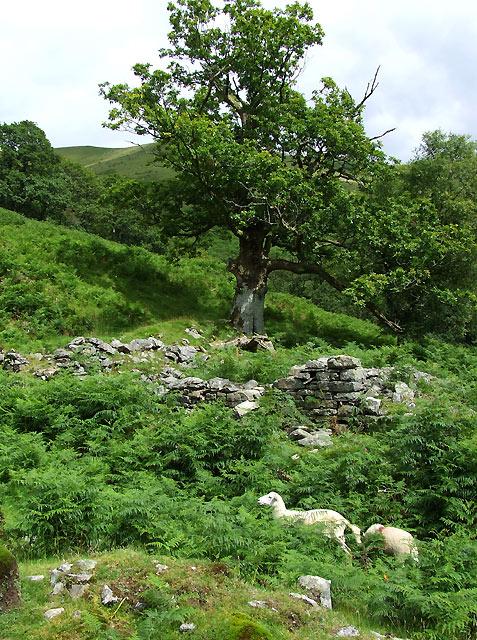 Foel (Ruin) Cwm Doethie, Ceredigion
