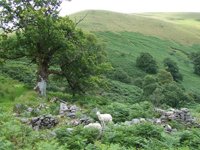 Foel (Ty Unnos, Ruin) Cwm Doethie, Ceredigion
