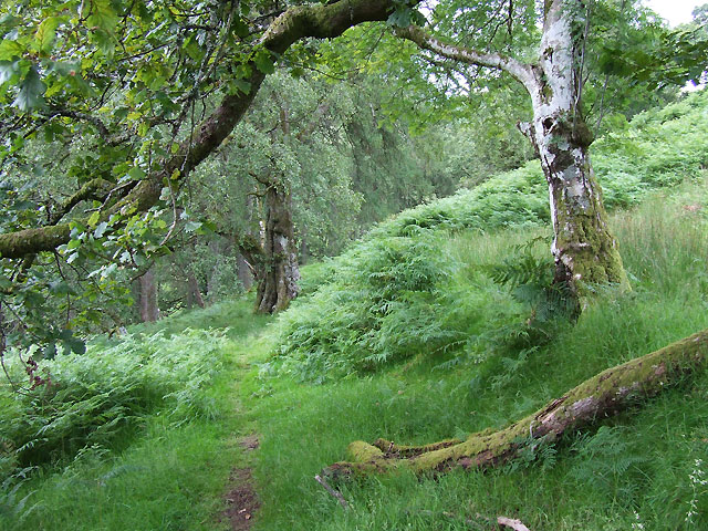 Bridleway through Woodland, Cwm Doethie, Ceredigion