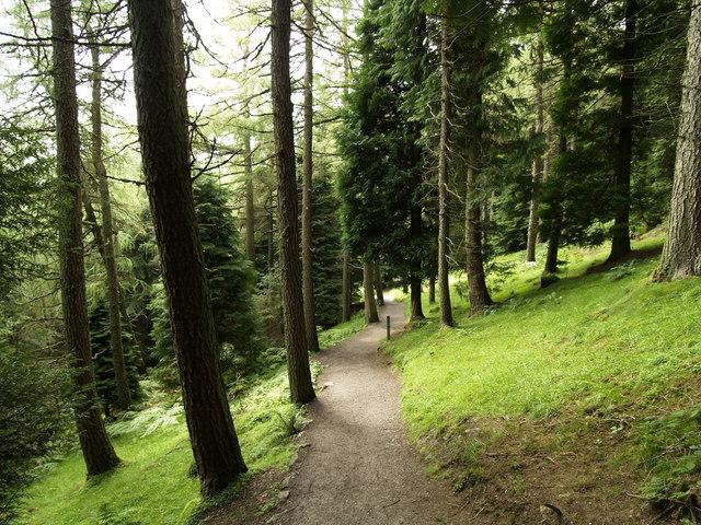 Whinlatter Woods