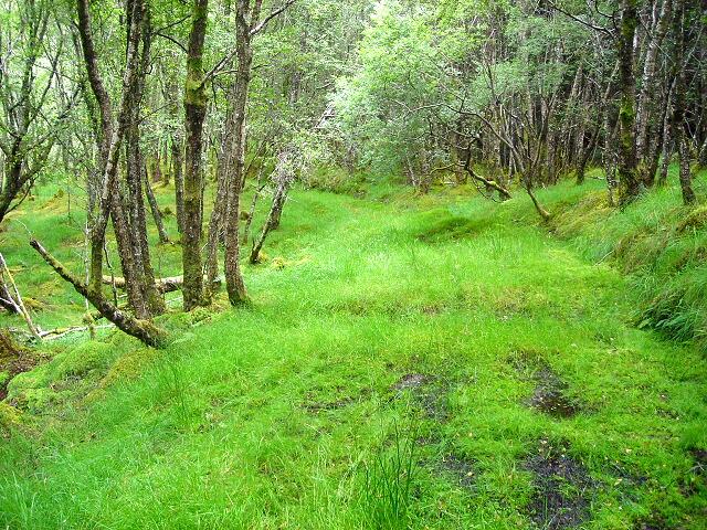 Path in Leanachan Forest
