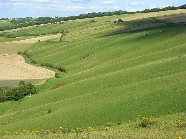 Downland, Letcombe Bassett