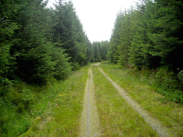 Track in Leanachan Forest