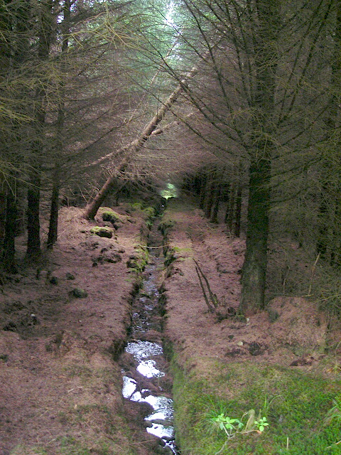 Drainage Ditch in Leanachan Forest