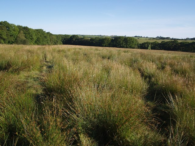 Chilla Moor