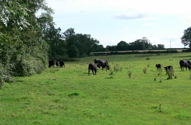 Farmland near Sapcote