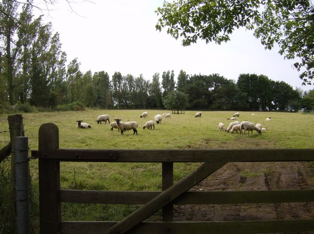 Pasture next to Yafford House
