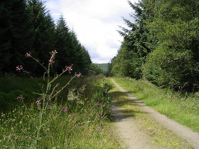 A forestry road north of Stennishope