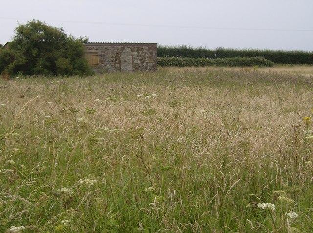 Hut on Dungewood Lane