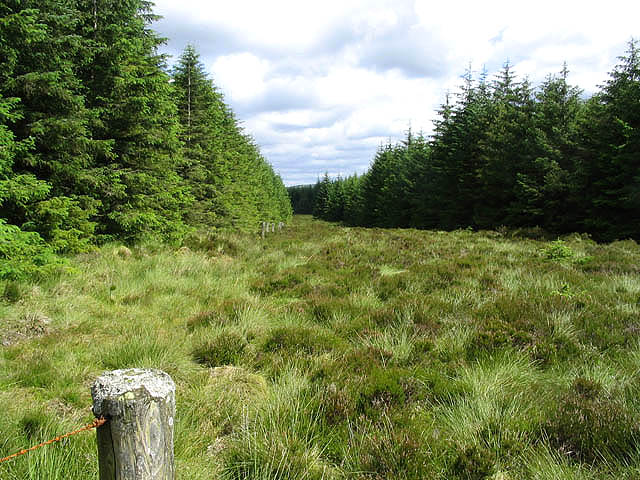 Forestry along Sandy Edge