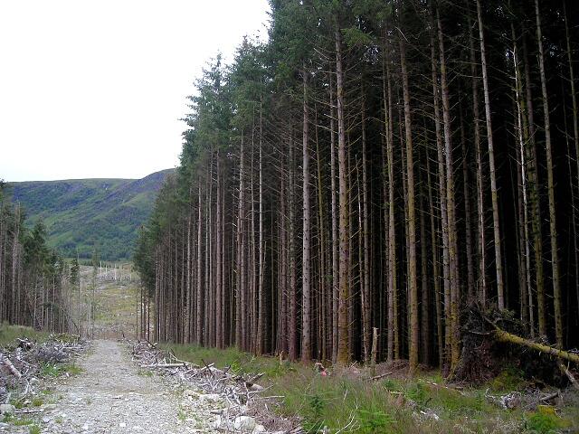 Gap in Leanachan Forest