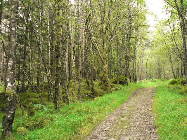 Track through Rannoch Forest