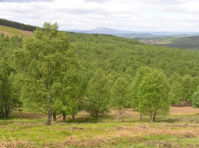 Balnahard Wood