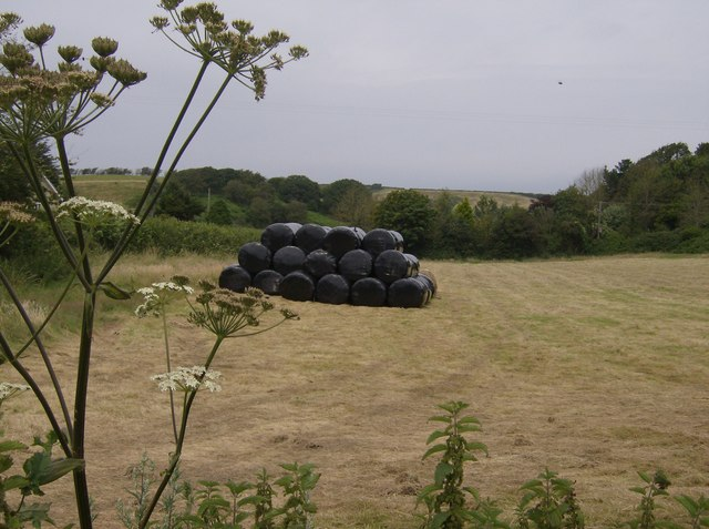 Silage bags and cow parsley