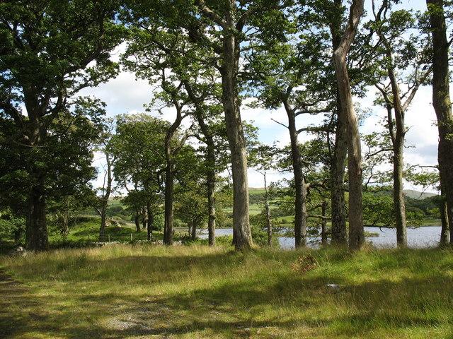 Lake shore woodland