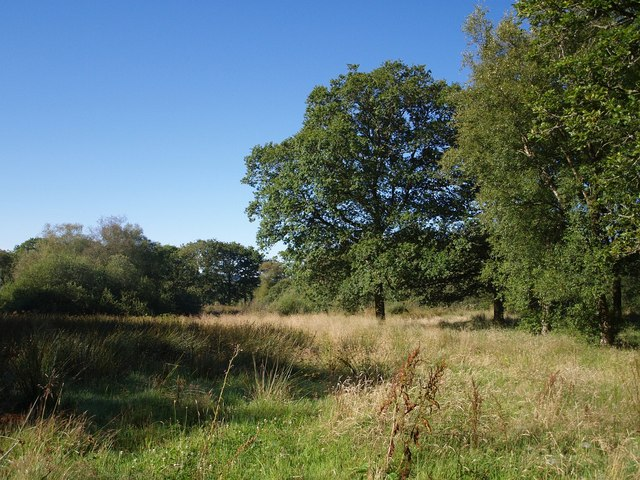 Field near Stonequarry Farm