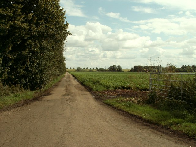 Road to Thorney Hill Farm