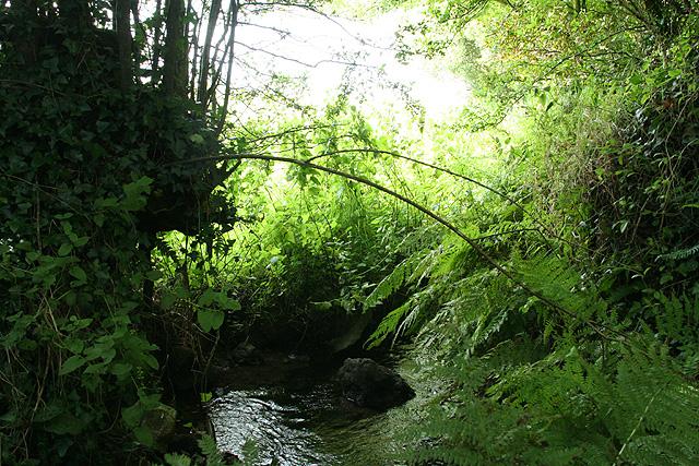 South Petherwin: stream near Trecongdon