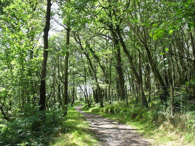 Ancient woodlands