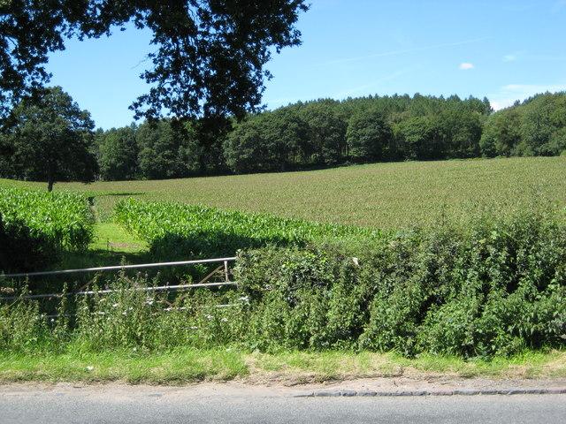 Footpath off A53