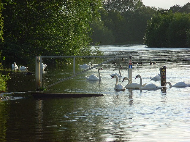 The River Thames near Reading