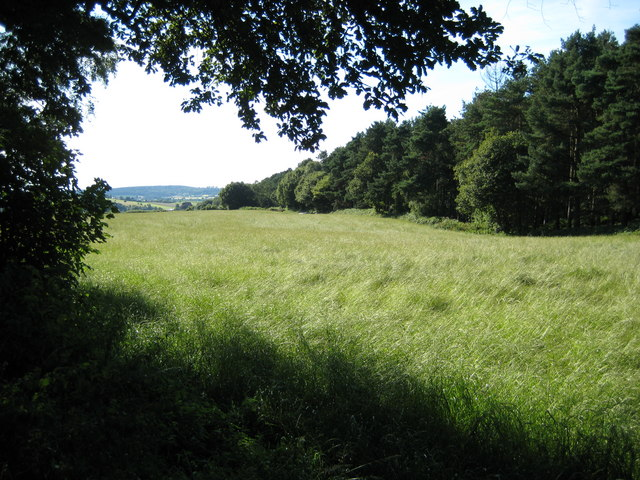 Field on Dog Lane