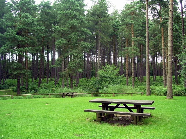 Picnic area, Sherwood Pines