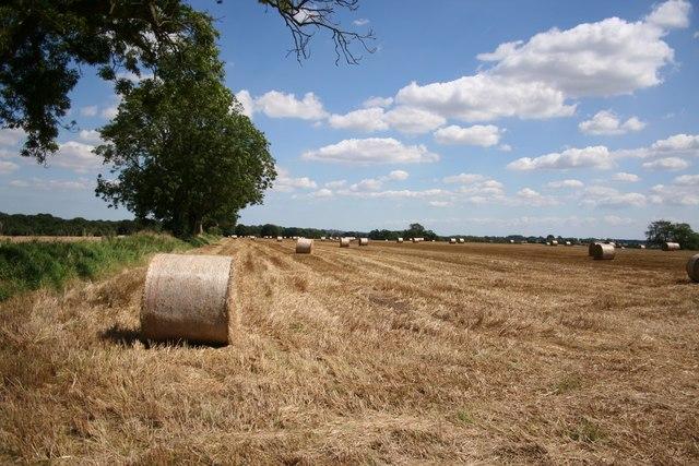 Bag Enderby farmland