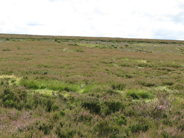 Really interesting moorland, Newbiggin Fell