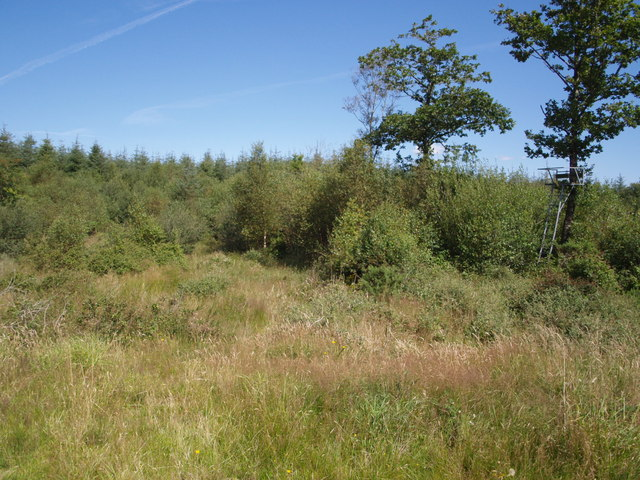 Cookworthy Moor Plantation