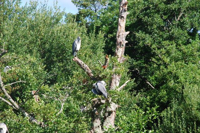Crehyrod - Herons