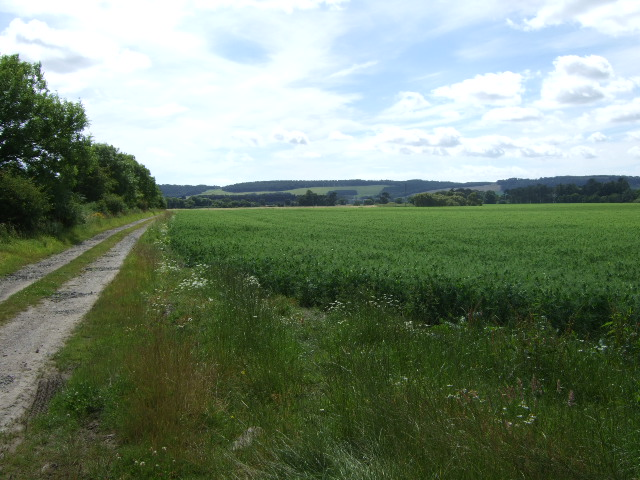 Farm track from Balwyllo